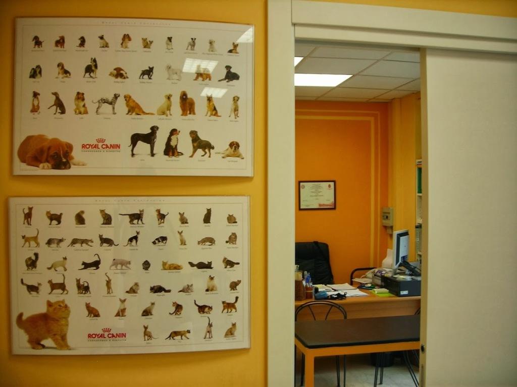 cane e gatto clinica veterinaria lecco valmadrera